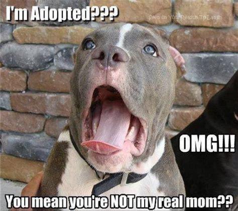 Dog Memes Funny - funny dog meme