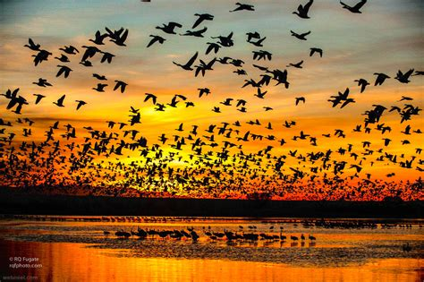beautiful nature photography examples  famous