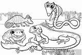 Reptiles Coloring Amphibians Colorare Anfibi Rettili Reptielen Kleurplaat Amphibiens Colorear Kleurplaten Anfibios Animali Pixers Ausmalbilder Schildkrote Clipart Dibujos Animales Dieren sketch template