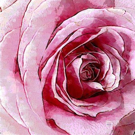 schwarze bedeutung schwarze bedeutung die rosenfarbe bedeutung beherrschen sie die blumensprache schwarze