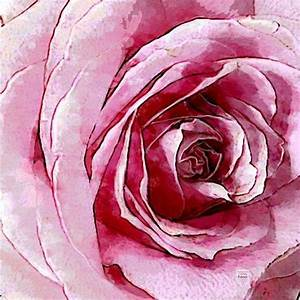 Gelbe Rose Bedeutung : bedeutung rosenfarbe excellent weie rosen stehen fr einen neuanfang oder neubeginn ebenso wie ~ Whattoseeinmadrid.com Haus und Dekorationen