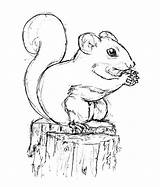 Squirrel Drawing Coloring Drawings Sketch Printable Line Nut Job Sketches Pencil Paper Sheets Animal Colors Searches Recent sketch template
