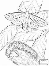 Moth Coloring Printable Pages Caterpillar Butterfly Bear Woolly Getcolorings Drawings Wooly Crafts Bible Cartoons Select Animals Nature Category Getdrawings Printables sketch template