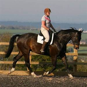 Laminitis And Abscess Recovery - Forageplus Talk