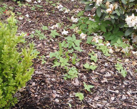 Pilze Im Garten Durch Rindenmulch by Bodentests Selbst Gemacht Bodenart Erkennen Und