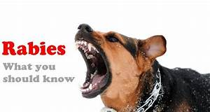 Your most common questions about rabies answered (Expert ...