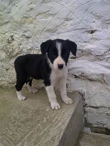 The gallery for --> Black And White Puppies