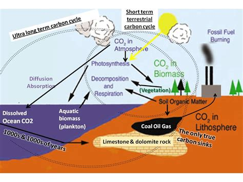 define the term carbon sink climate system components