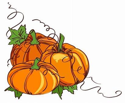 Harvest Transparent Pumpkin Clipart Thanksgiving Clip Vines