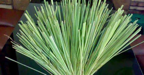 khasiat sereh  daun sereh angkringan jogja wedang