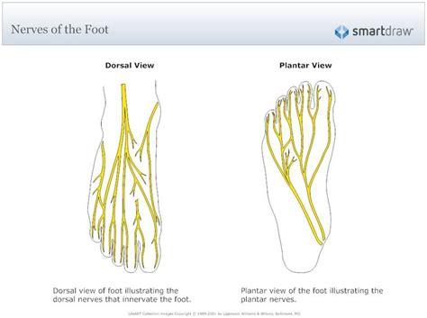 image nerves   foot bronze casting