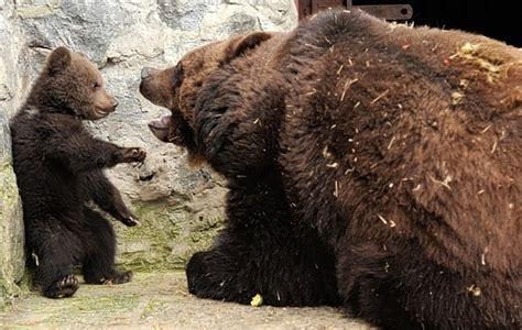 discipline bear cub style baby animal zoo