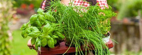 welche pflanzen vertragen rindenmulch nicht rindenmulch test vergleich 1a welche pflanzen sind