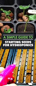 A Simple Guide To Starting Seeds For Hydroponics In 2020
