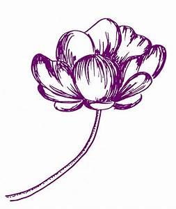 Photos: Cute Flower Drawings Tumblr, - DRAWING ART GALLERY