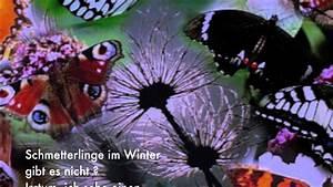 Was Machen Schmetterlinge Im Winter : schmetterlinge im winter bernd t pfer gedicht 188 ~ Lizthompson.info Haus und Dekorationen