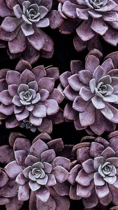 Iphone Pretty Wallpapers Phone Super Succulent Succulents