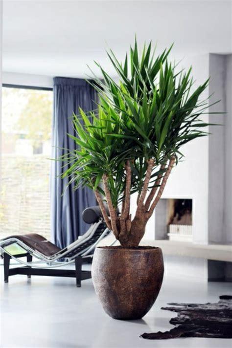 Große Pflanze Wohnzimmer by Palmlilie Eine Bezaubernde Zier Und Nutzpflanze