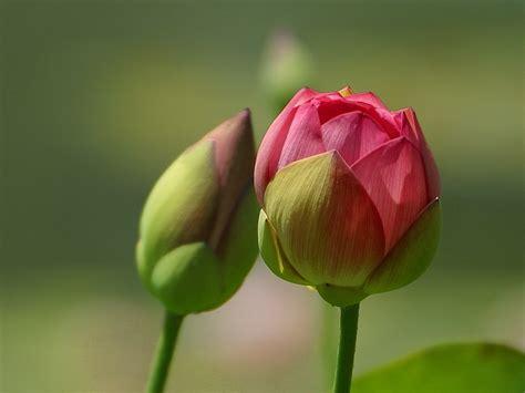 flower to bloom ςτατιςτιcα ιηςιgηιƒιcαηcε january 2011