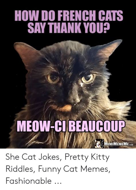 female cat in french