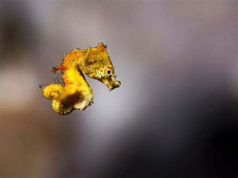 underwater macro photography tips goodvis