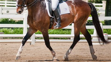 how do horses stay dressage how to keep your horse connected through transitions equestriancoach com blog