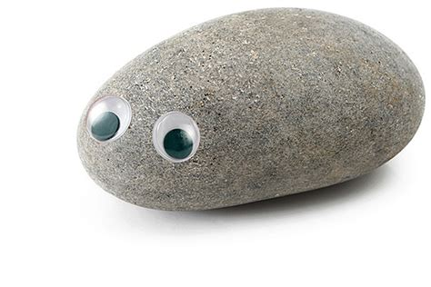 Sad Day For Pet Rock Owners