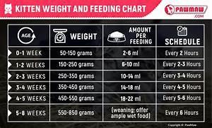 How Much Food Should I Feed My Cat Chart Cbd Suburban