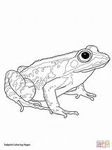 Coloring Tadpole Pages Frogs Woodfrog Frog Printable Preschool Supercoloring Animals Drawing Green Crafts Bible Cartoons Select Nature Many Category Getdrawings sketch template