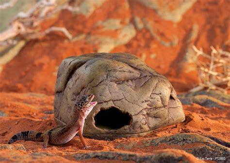 exo terra gecko cave terrestrial gecko hide medium