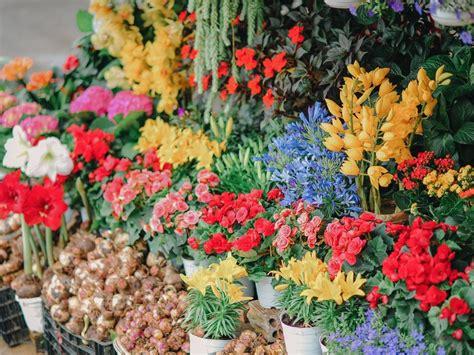 tanaman hortikultura cocok ditanam rumah zorg