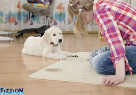 Bathroom Carpet Smells by How To Get Urine Smell Out Of Carpet Best Trick To