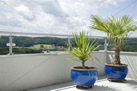 Exotische Topfpflanzen Auf Terrasse
