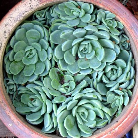 succulent photo our emerald city oh for the love of succulents