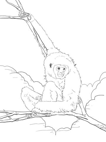 white handed lar gibbon coloring page supercoloringcom
