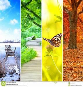 Achat Citronnier 4 Saisons : quatre saisons color es photo libre de droits image ~ Premium-room.com Idées de Décoration