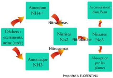 cycle de l eau aquarium commencement guide du d 233 butant aquariophilie eau douce