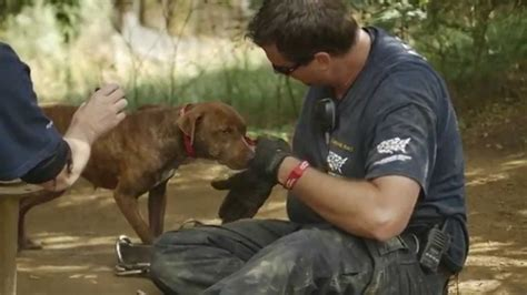 Dogs Rescued From Suspected Dogfighting Operation You