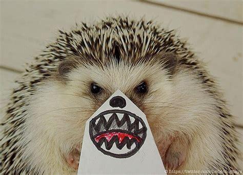 marutaro adorable hedgehog funny paper faces incredible