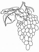 Grapes Coloring Pages Fruit Grape Vine Fresh Fruits Printable Spain Recommended Getcolorings sketch template