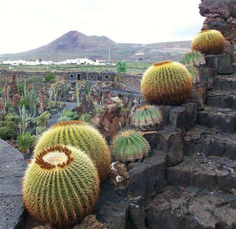 paradis express jardin de cactus cesar manrique