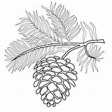 Pinecone Coloring Printable Pine Tree Coloringpages Branch Cone Cones Pinecones Trees Fall Branches Version Too Reserved Patterns Rights Copyright 2006 sketch template
