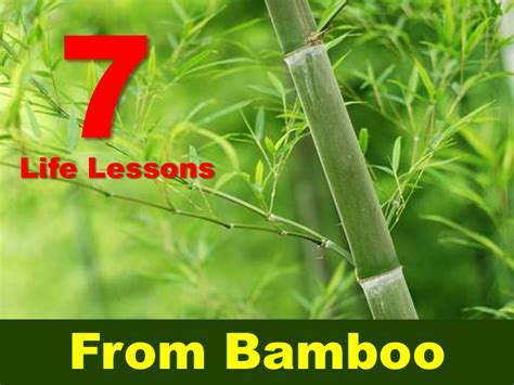 BAMBOO QUOTES image quotes at hippoquotes.com