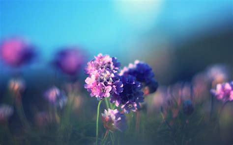 壁纸桌面小清新花朵小清新花朵图片 小清新花朵唯美意境 图片