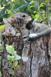 Was Brauchen Katzen : paws for pets cats pinterest katzen tier und freundin ~ Lizthompson.info Haus und Dekorationen