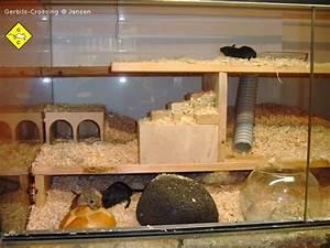 Maus In Wohnung : rennmaus einrichtung f r das terrarium ~ Markanthonyermac.com Haus und Dekorationen