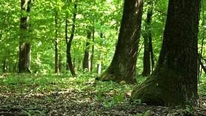 Man Running Away In The Woods Stock Footage Video 3114673 ...
