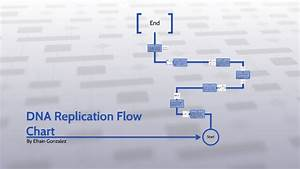 Dna Replication Flowchart