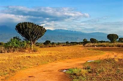 Savanna African Uganda Introduction Savannah Africa Landscape