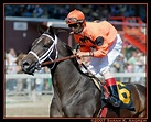 Racehorses: Bits Commonly Used in Thoroughbred Horse Racing, Sales & Breeding | Rock and Racehorses: The Blog